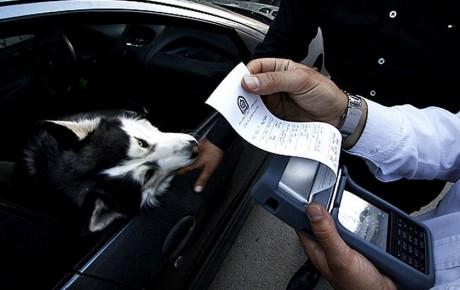 برخورد پلیس با حمل سگ در خودروها!